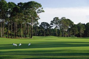 Indian River Golf Course Vero Beach